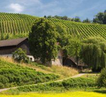 Vineyards near Oberkirch Sticker
