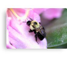 Sweet Bumble Bee Canvas Print