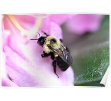 Sweet Bumble Bee Poster