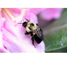 Sweet Bumble Bee Photographic Print