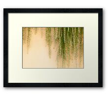 Weeping Rosemary Framed Print