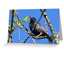 33 - STARLING  - DAVE EDWARDS - 2012 Greeting Card