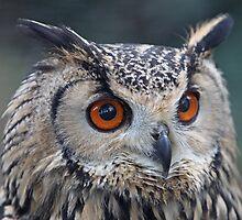 Owl by blueinfinity