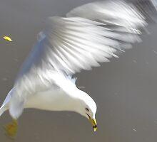 Seagull in Flight by Sofia Khrystyne Whitney
