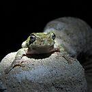 Mr. Frog by Elizabeth Burton