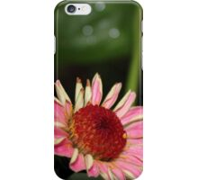 Fallen Zinnia iPhone Case/Skin