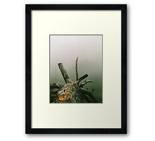 Desolate in the hills of Oakland Framed Print