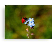 Ladybird - Colorful Gardener  Canvas Print