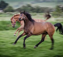 Dancing horses by a h
