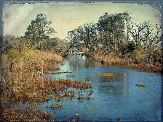Tidal Creek - Outer Banks North Carolina by MotherNature