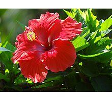 Close Up I - Rose Of Sharon - Primer Plano I - Hibisco Photographic Print