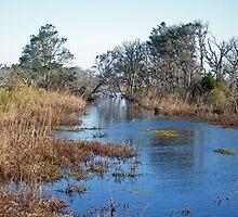 Tidal Creek - Outer Banks North Carolina by MotherNature