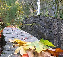 Falling Leaves at the Falls by Randy Richards