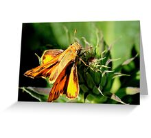 Fiery Skipper Greeting Card