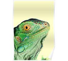 Iguana head Poster