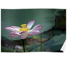 Lotus Position Poster