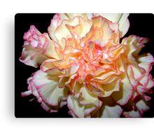 Sweet Carnation Canvas Print