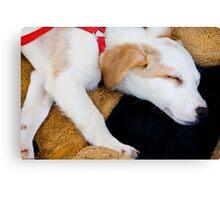 Domestic dog sleeping Canvas Print