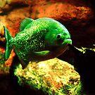 Piranha by Stuart Baxter