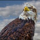 Bald Eagle by alan tunnicliffe