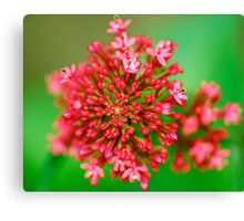 Macro Close Up Flower Canvas Print