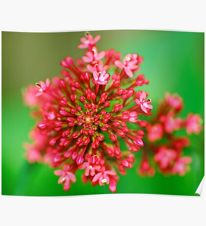 Macro Close Up Flower Poster