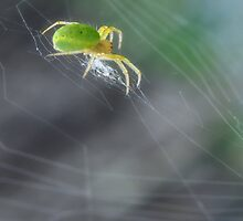 Green Spider 1.0 by Yhun Suarez
