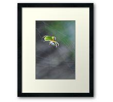 Green Spider 1.0 Framed Print