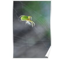 Green Spider 1.0 Poster
