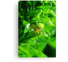 Green Spider 2.0 Canvas Print