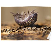 pill bug in trouble Poster