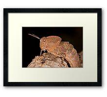 Toad Grasshopper Framed Print