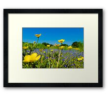 Buttercup Meadow Framed Print