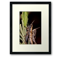 two grasshoppers Framed Print