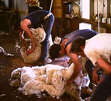 Shearing by diggle