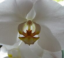 Backlit Orchid by WildestArt