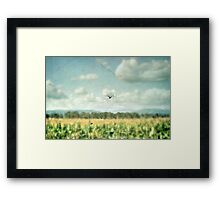 Summer Corn Framed Print