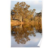 River Murray Reflections Late Afternoon Poster