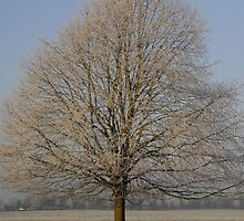 Frost on the tree. by sandyprints