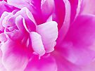 Peony Petals #2 by Laurie Minor