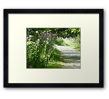 Frolicking Among The Phlox  Framed Print