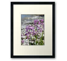 Frolicking Among The Flox 2 Framed Print