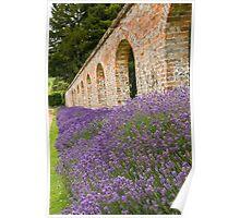 Lavender walled garden. Poster