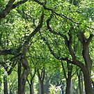 Skins:  Central Park Trees by newyorknancy