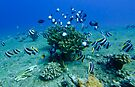 Kauai Reef Scene by thatche2