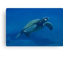 Ascending Hawaiian Green Sea Turtle Canvas Print