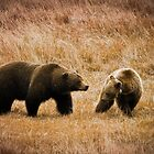 Grizzly 2 by Miles Glynn