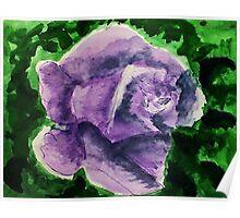 Dramatic Lavender rose, watercolor Poster