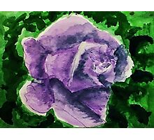 Dramatic Lavender rose, watercolor Photographic Print