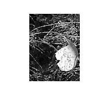 Broken Egg Photographic Print